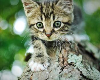 חיסון לחתול – חיסון מרובע כל המידע